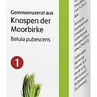 Gemmomazerate Moorbirke - ausgezeichnete Heil- und Regenerationskraft